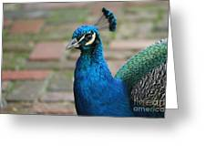 Peacock 2 Greeting Card