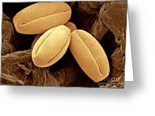 Pear Pollen Grains, Sem Greeting Card