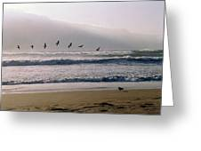 Pelican Brief Greeting Card