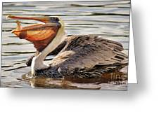 Pelican Catching A Fish Greeting Card