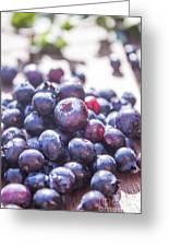 Picking Huckleberries Greeting Card