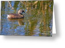Pied Billed Grebe Greeting Card