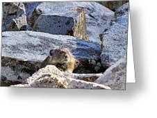 Mountain Pika Greeting Card