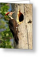 Pileated #26 Greeting Card