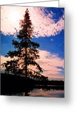 Pine Tree By Peck Lake 4 Greeting Card