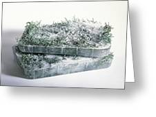 Pine Twigs And Ice Greeting Card