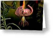Pink Asiatic Lily Greeting Card