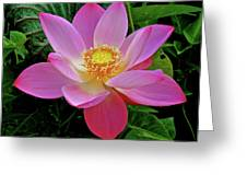 Pink Blooming Lotus Greeting Card