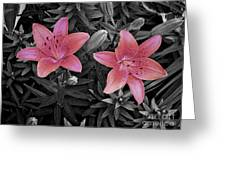 Pink Daylilies With Partially Desaturated Petals And Black And White Background Greeting Card