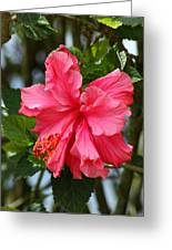 Pink Hibiscus Flower On A Tree Greeting Card