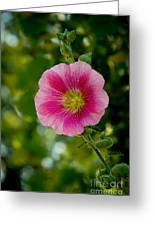 Pink Hollyhock Greeting Card