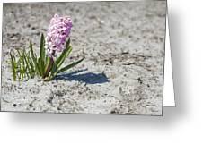 Pink Hyacinths Greeting Card
