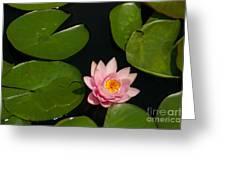 Pink Lotus Waterlily Greeting Card