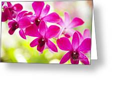 Pink Orchid Lei Greeting Card