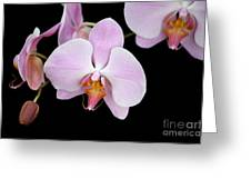 Pink Orchid Vii Greeting Card