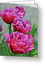 Pink Parrot Tulips Greeting Card
