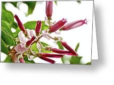 Pink Tropical Flower In Huntington Botanical Garden In San Marino-california Greeting Card