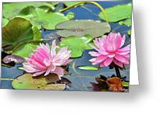 Pink Water Lily Series Greeting Card