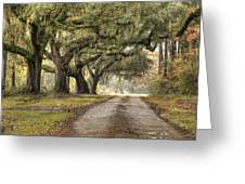 Plantation Drive Live Oaks  Greeting Card