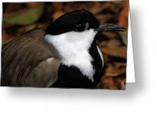 Plover Greeting Card by Scott Hovind