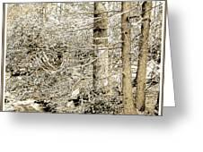 Pocono Mountain Stream, Pennsylvania, Digital Art Greeting Card