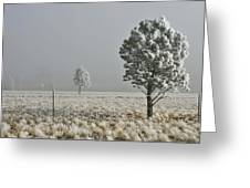 Pogonip Frosty Morning Greeting Card