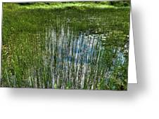 Pond Grasses Greeting Card