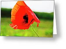 Poppy The Beauty Greeting Card