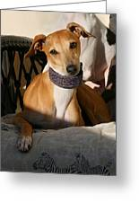 Portrait Of An Italian Greyhound Greeting Card