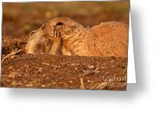 Prairie Dog Tender Sunset Kiss Greeting Card