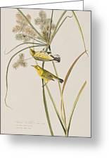 Prairie Warbler Greeting Card