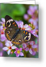 Happy Little Butterfly  Greeting Card