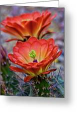 Pretty Little Claret Cup  Greeting Card