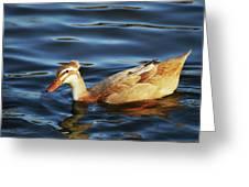 Puffy Headed Duck Greeting Card