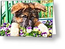 Puppy Oskar Greeting Card