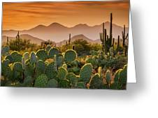 Pure Sonoran Gold  Greeting Card