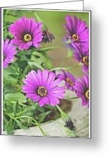 Purple Aster Flowers Greeting Card