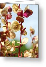 Purple Goosefoot Chenopodium Greeting Card
