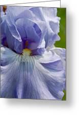 Purple Iris Greeting Card
