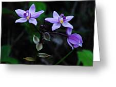 Purple Orchids 2 Greeting Card