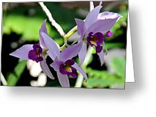 Purple Orchids Greeting Card