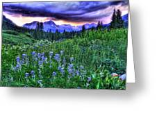 Purple Skies And Wildflowers Greeting Card
