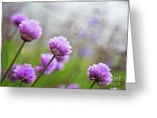 Purple Spring 7 Greeting Card