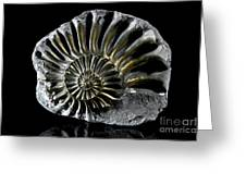 Pyritized Ammonite Greeting Card