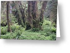 Quinault Rain Forest 3156 Greeting Card