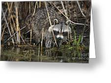 Raccoon Fishing Greeting Card