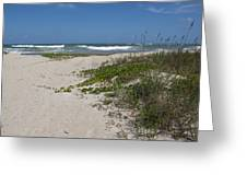 Railroad Vine And Sea Oats On The Atlantic In Florida Greeting Card