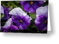 Rain Drops In The Morning Greeting Card