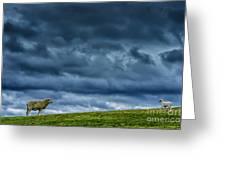 Rain Storm Ewe And Lamb Greeting Card