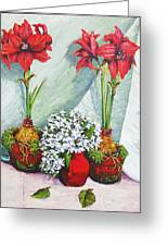 Red Amaryllis With Shooting Star Hydrangea Greeting Card